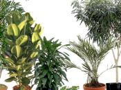 INQUINAMENTO DOMESTICO Ecco piante depurano l'aria