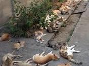 Tashirojima, l'isola gatti