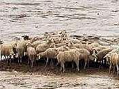 Sardegna, ciclone scuse bugie