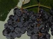 cura dell'uva.