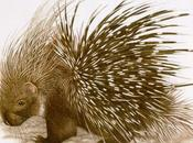 strategia difensiva dell'istrice: aculei uccidono