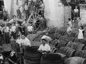 1880 analisi chimica vini della provincia leccese