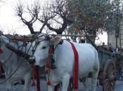 Frantoi Aperti: Giano dell'Umbria dell'Olio Festa della Frasca novembre dicembre 2013