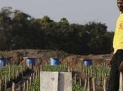 politica land grabbing crea crisi umanitaria globale (BlogLive.it)