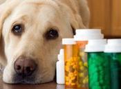 Farmaco-vigilanza: medicine animali costano triplo quelle umani. Ministero della Salute tace...