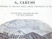 Dell'Olivo Monografia Caruso Professore Agraria della Regia Università Pisa, Torino Unione Tipografico editrice 1883, CAPO