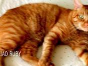 gatto Ruby, anno dopo