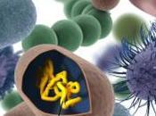 protocellula sintetica: siamo sempre vicini ricostruire cellula primordiale