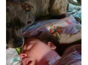 Staffy, bull terrier anni vive Dylan coma dalla nascita
