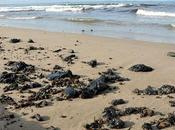 Sardegna: danno ambientale gravissimo! nessuno parla.
