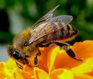 Salviamo le api!