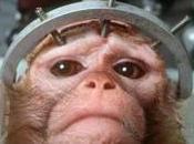 scimmie Brianza vivisezione, Brambilla chiede chiarimenti