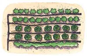Come bagnare l orto risparmiando acqua paperblog for Irrigazione a caduta