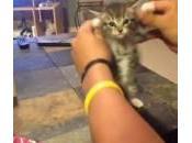 """gattino balla canzone """"Get Silly"""" (Video)"""