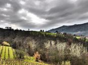 Piemonte ovvero...Langhe