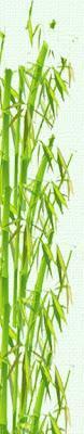 MYLUMAS l'abbigliamento in fibra di bambù per essere trendy, originali ed ecologici!