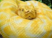 Torta terrificante torta cobra