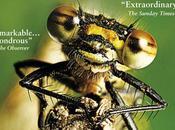 viaggio mozzafiato insetti Wild