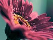 Trovare immagini gratuite qualità blog Flickr