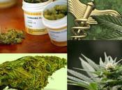 Torino primo passo l'uso farmaci base cannabis