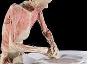 Bodies revealed: viaggio corpo umano (quello vero).