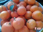 Liquore mandarino mandarinetto
