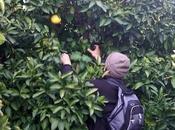 Siracusa: arrestati siracusani marocchino furto arance