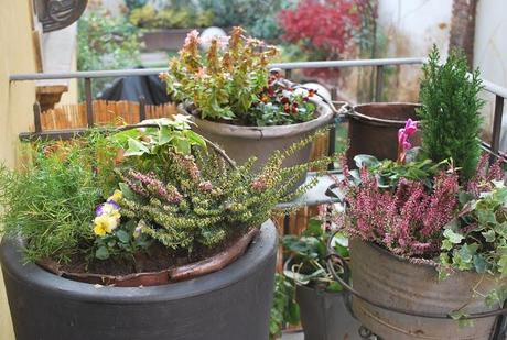 fiori e piante per il balcone d 39 inverno paperblog