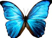 """The coming butterfly dreams suggests evolutio..."