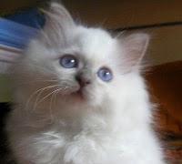 Il gatto monegasco