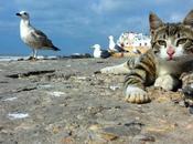 Gatti gattini Marocco