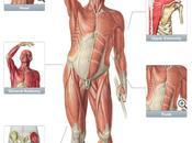 Recensione Sobotta Anatomy Atlas iPhone iPad