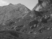 Lorenzo Viani, Alpi Apuane