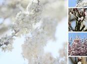 Umore primaverile Пролетно настроение