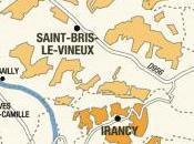 Sauvignon Blanc Borgogna?? course