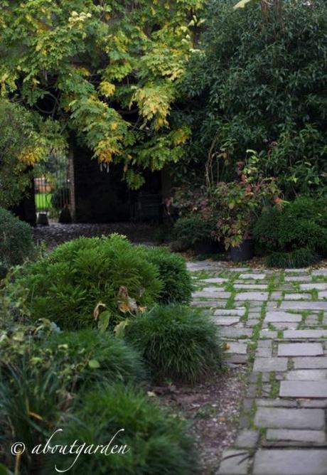 Giardino vivaio botanica santa marizza paperblog - Giardino in ombra ...