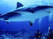 ZORRO, PESCECANE CERNIE #poesia #subacqueo #pesca