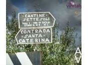 Cantine Settesoli aspetta Vinitaly 2014