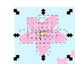 Il fiore rosa