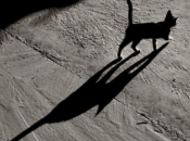 Elogio dell'ombra Jorge Luis Borges