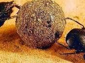 ogni Paese mondo c'è marcio, come Italia, solo sono milioni insetti stercorari. accumulano spargono anche dove c'è.