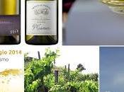 Carricante Tenuta Fessina primo salone vino bianco Riccione. WHITE WINE SHOW, maggio 2014 Palazzo Turismo