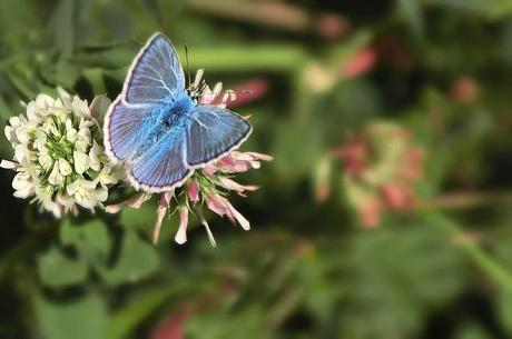 Farfalla paperblog - Immagini di farfalle a colori ...
