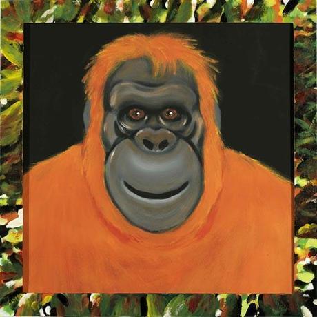 Daniele Nannini - orango illustrazione