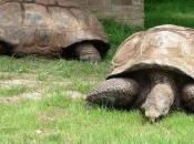 """""""tosaerba"""" ecologici? tartarughe giganti!"""