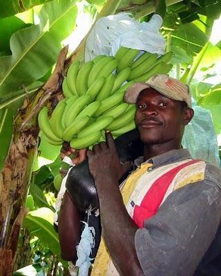 Banane e Polase