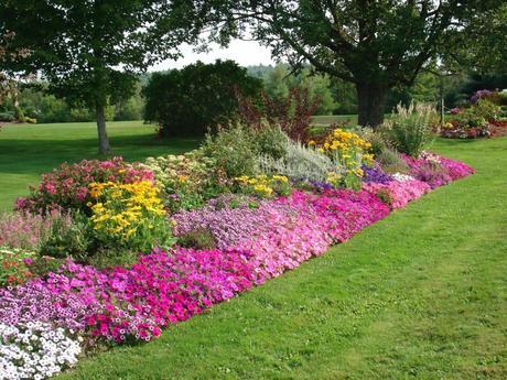 Fiori tutto l anno paperblog for Alberelli da giardino fioriti