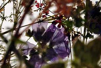 Sculture di fiori flower sculptures paperblog for Sculture di fiori