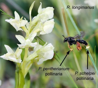 La strategia delle orchidee per un successo pacifico