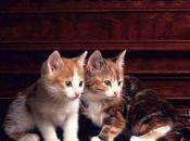 Duetto buffo gatti!
